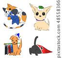 어린이 날 고양이 48558366