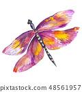 粉色 蜻蜓 虫子 48561957
