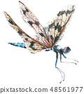 蜻蜓 虫子 水彩画 48561977