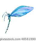 蓝色 蜻蜓 水彩画 48561990