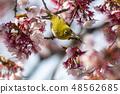 Kanoharu spring 48562685