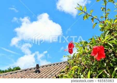 沖繩夏天藍天和木槿 48565063