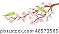 停在樱花树枝上的两个网格设计材料 48573565