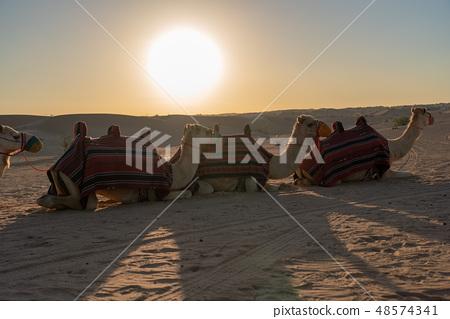 沙漠和駱駝 48574341