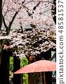 도쿄 야스쿠니 신사의 벚꽃 48581537