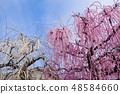 [Kanagawa Prefecture] Soga Bairin 48584660
