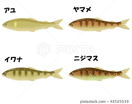 各種河魚 48585039