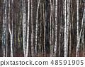 Tree trunks background image 48591905