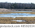 Swampland by early springtime 48592034
