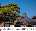 Zhongshan Temple where the plum is in full bloom 48592833
