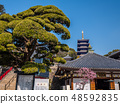 Zhongshan Temple where the plum is in full bloom 48592835