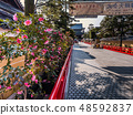 Zhongshan Temple where the plum is in full bloom 48592837
