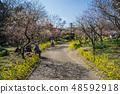 Suma Rikyu Park where the plum is in full bloom 48592918