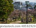 Suma Rikyu Park where the plum is in full bloom 48592920