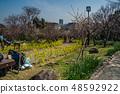 Suma Rikyu Park where the plum is in full bloom 48592922