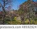 Suma Rikyu Park where the plum is in full bloom 48592924