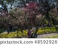 Suma Rikyu Park where the plum is in full bloom 48592926