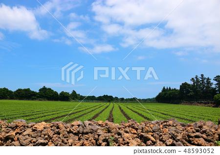 농촌,밭,농사, 48593052