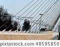 String bridge in Jerusalem Jerusalem bridge tram 48595850