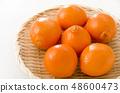 Mineola Orange 48600473