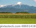 Austria - Corn field and green meadow in mountain 48601438