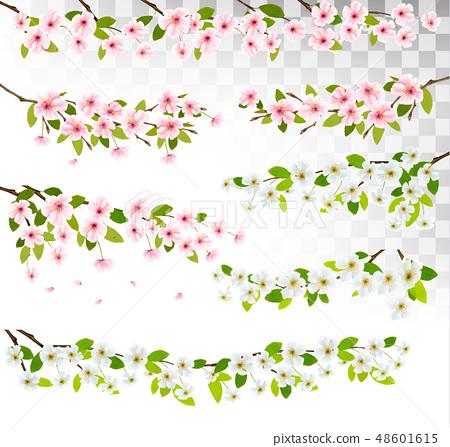 Several blossom of cherry and sakura borders. 48601615