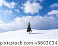 홋카이도 겨울 비 에이 크리스마스 트리 나무 48603034