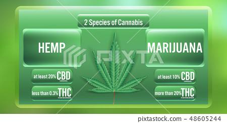 Hemp and Marijuana 2 Species of cannabis 48605244