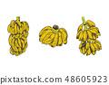 Vector Illustration of banana fruit sketch for design, website, background, banner. Travel and 48605923