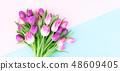 Pink fresh tulips 48609405