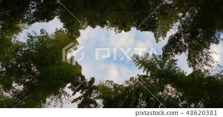 대나무 48620381