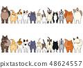 貓的前後邊框顏色 48624557