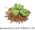 Seeds and leaves of a coriander 48631116