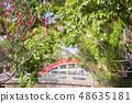 Sumiyoshi Taisha的太鼓橋和紅白梅 48635181