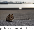 Cat in Okinawa 48636012