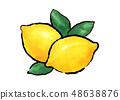 레몬 레몬 일러스트 48638876