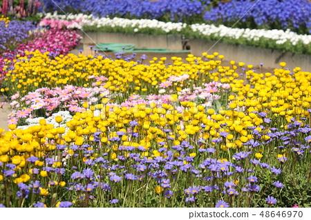 春天的花朵 48646970