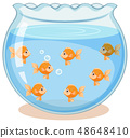 Golden fish in the tank 48648410