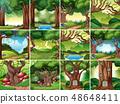Set of rainforest scene 48648411