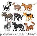 Set of wild animal character 48648425