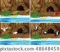 Set of nature swamp and animals 48648459