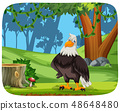 An eagle in nature background 48648480