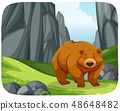 A grizzly bear in nature scene 48648482