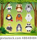 Set of animal sticker 48648484