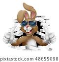 兔子 兔 太阳镜 48655098