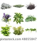 彩礁園林植物摳圖 48655847