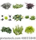 彩礁園林植物摳圖 48655848
