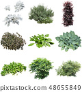 彩礁園林植物摳圖 48655849