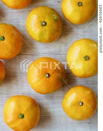 한국의 과일 제주감귤 48656665