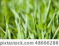 Field of green grass 48666288